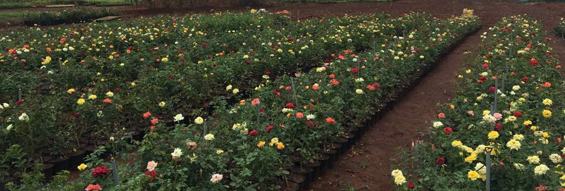Plant Nursery In Bangalore Flower Nurseries
